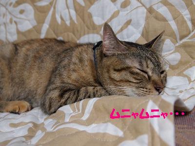 2010_090801051.jpg
