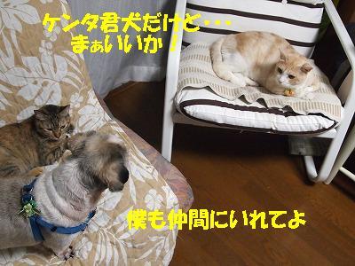 2010_090801151.jpg