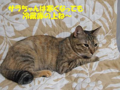 2010_090801331.jpg