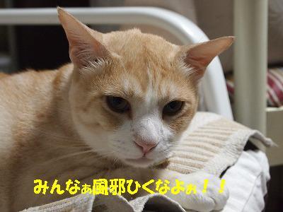 2010_090801401.jpg