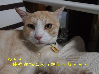 2010_091801601.jpg