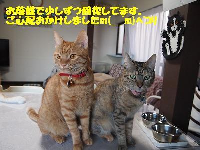 2010_092600291.jpg