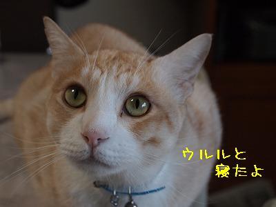 2010_092600411.jpg