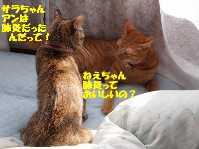 2010_100200781.jpg