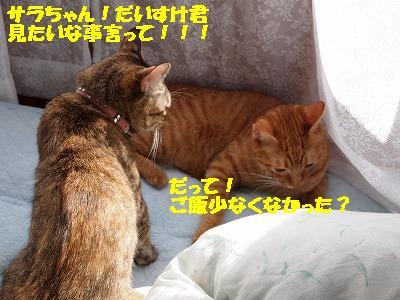 2010_100200811.jpg