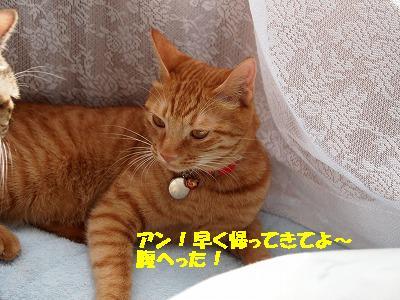 2010_100200831.jpg