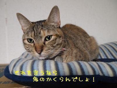 2010_100202811.jpg