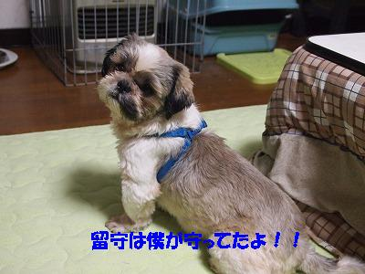 2010_101300531.jpg