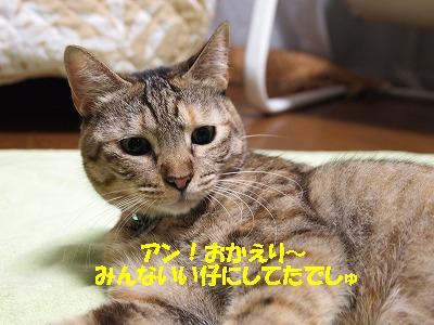 2010_101300571.jpg