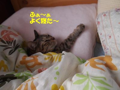 2010_102400381.jpg
