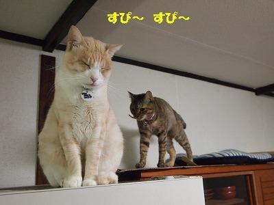 2010_102700951.jpg