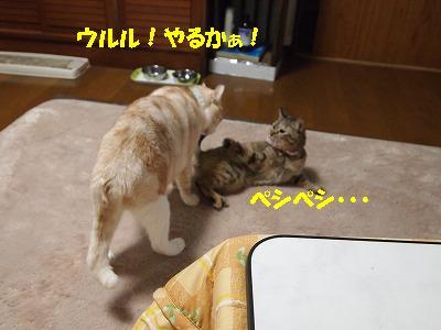 2010_1031029211.jpg