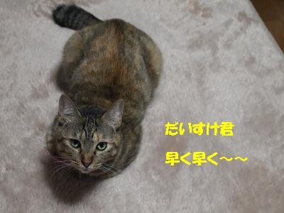 2010_110700531.jpg