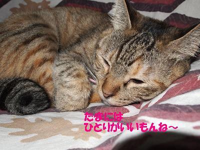 2010_110701351.jpg
