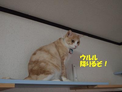 2010_110701471.jpg