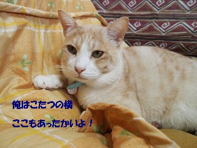 2010_110701861.jpg