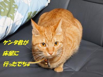 2010_111700461.jpg