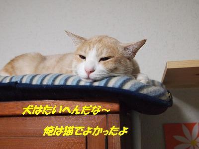 2010_111701571.jpg