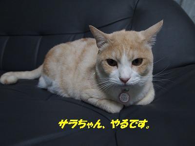 2010_111703011.jpg