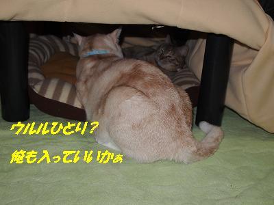 2010_112100041.jpg
