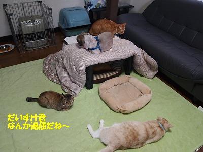 2010_112103221.jpg
