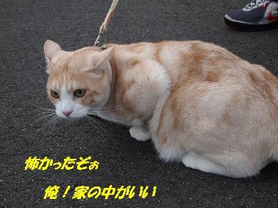 2010_112104841.jpg
