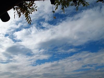 2010_112105881.jpg
