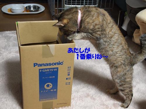 2010_1124009611.jpg
