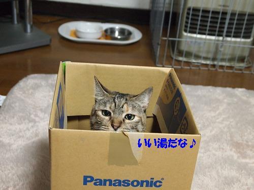 2010_112401021.jpg