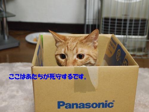 2010_112401211.jpg