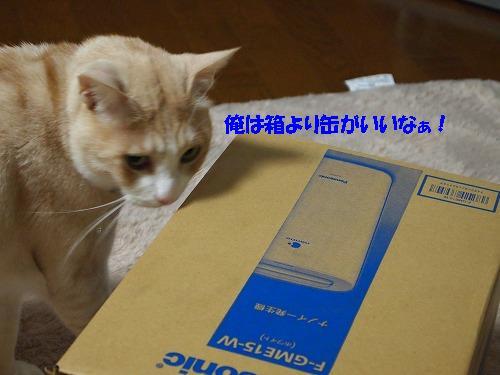2010_1124028511.jpg