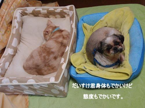 2010_1208006611.jpg