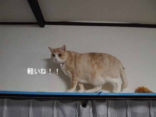 2010_122202841.jpg