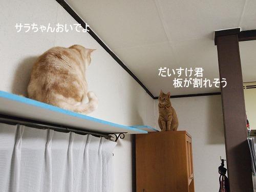 2010_122202951.jpg