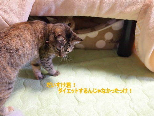2011_010401961.jpg