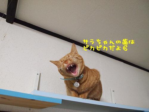 2011_010900121.jpg