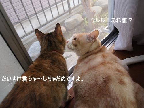 2011_010902291.jpg