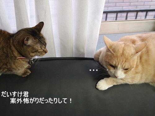 2011_010903801-1.jpg