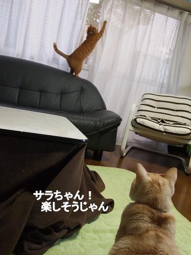 2011_013001381.jpg