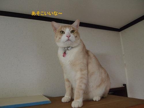 2011_013002421.jpg