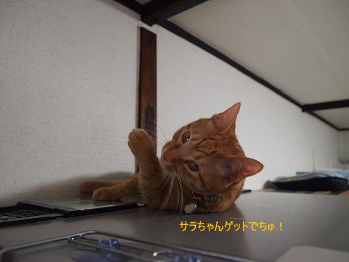 2011_013002441.jpg