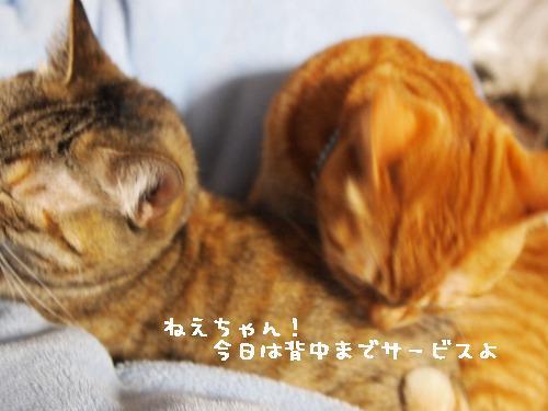 2011_021300251.jpg