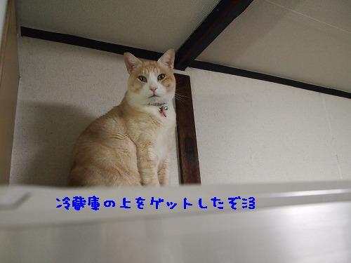 2011_021302611.jpg