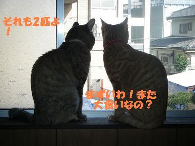 DSCF0721.jpg