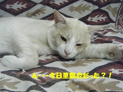 DSCF18201.jpg