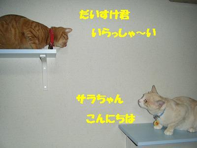 DSCF25411.jpg