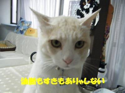 s-2010_05300445.jpg