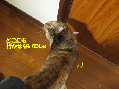 s-PA168193.jpg
