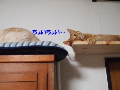 s-PB069204_20101106230715.jpg
