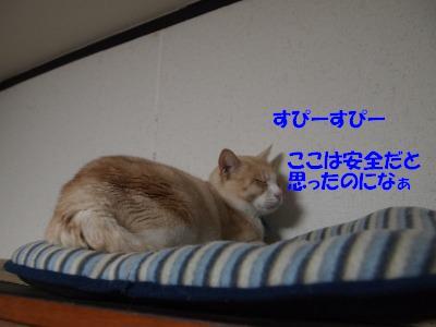s-PB069215_20101106230300.jpg